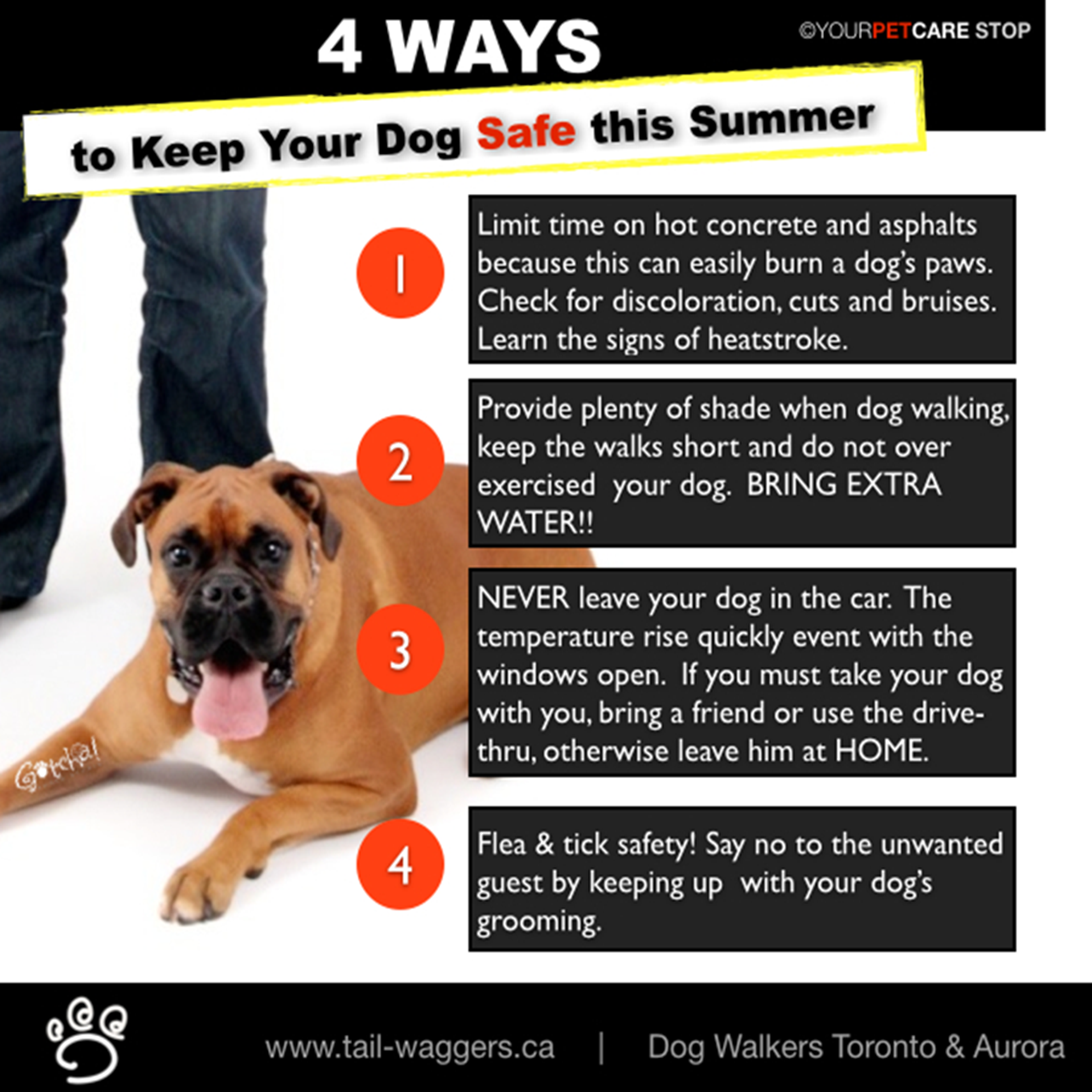 ultimate dog walking pet care aurora newmarket wellnesswednesday 4 ways to keep your dog. Black Bedroom Furniture Sets. Home Design Ideas